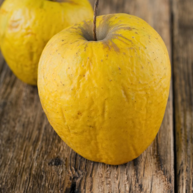 """Couple of overriped apples on wooden board"" stock image"