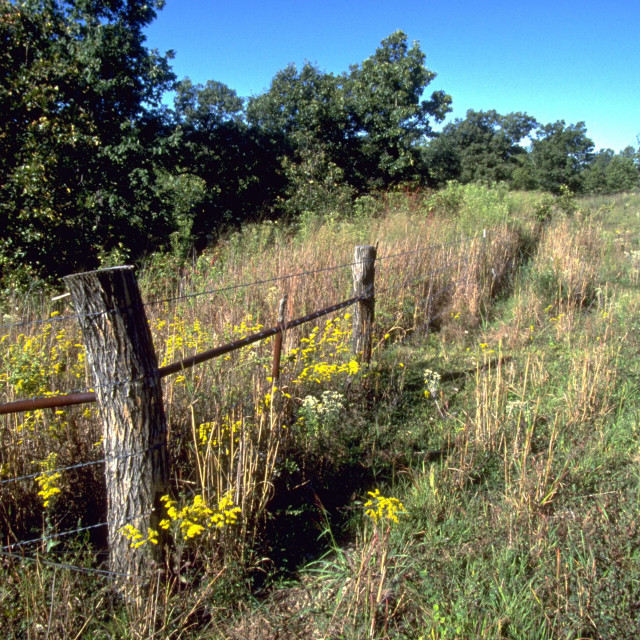 """Ozarks' Fence Row"" stock image"