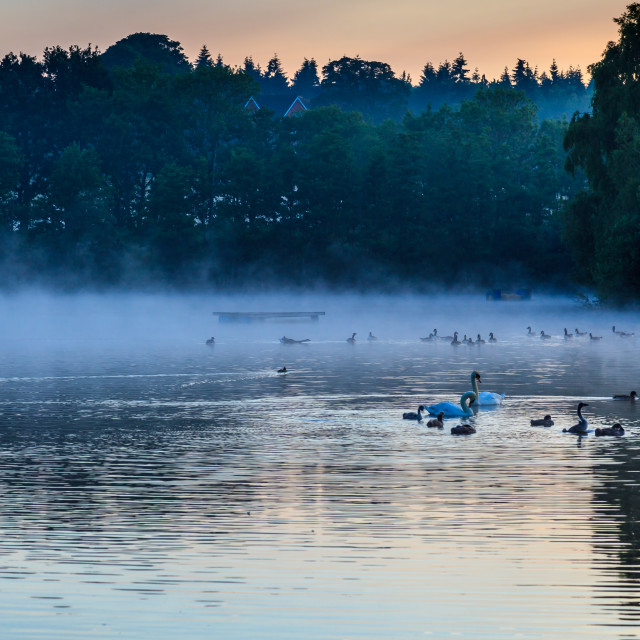 """Early Morning Swim"" stock image"