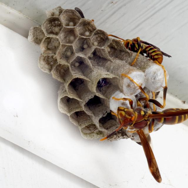"""Wasp Family"" stock image"