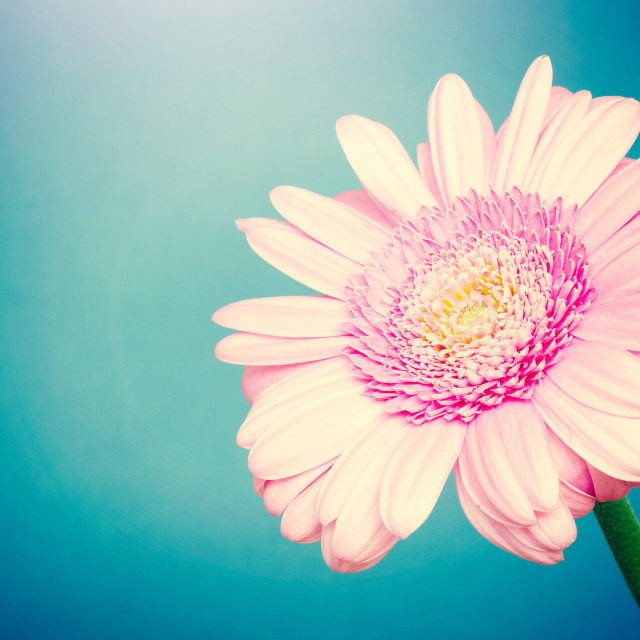 """Flower"" stock image"