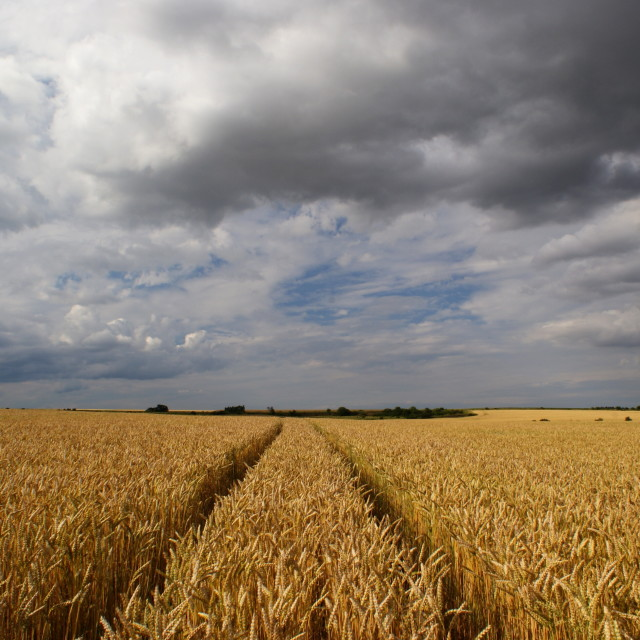 """""""Traces of grain"""" stock image"""
