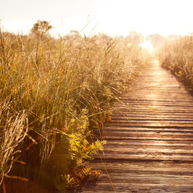 """""""Old wooden boardwalk and morass"""" stock image"""