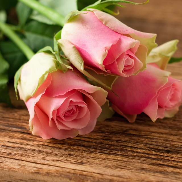 """""""Three beautiful pink roses on wooden board"""" stock image"""