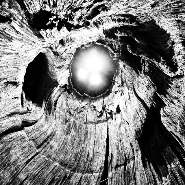 """Tree and lights"" stock image"
