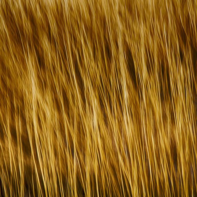 """Reeds Movement"" stock image"