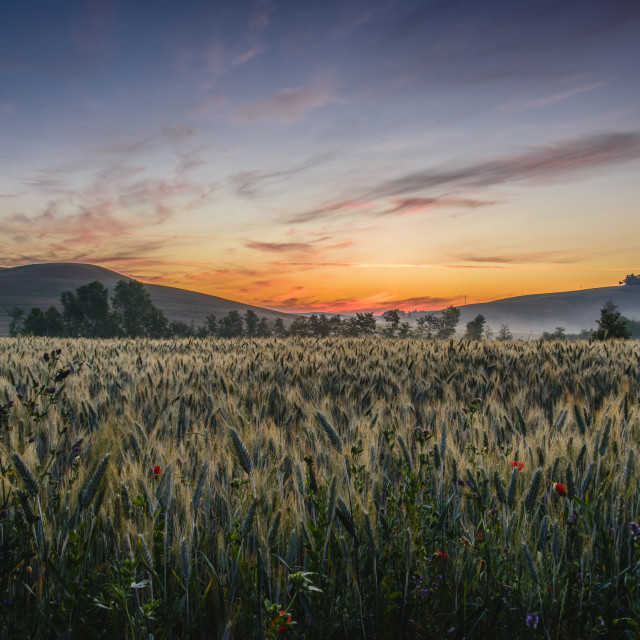 """Sunrise over the Val d'Orcia"" stock image"
