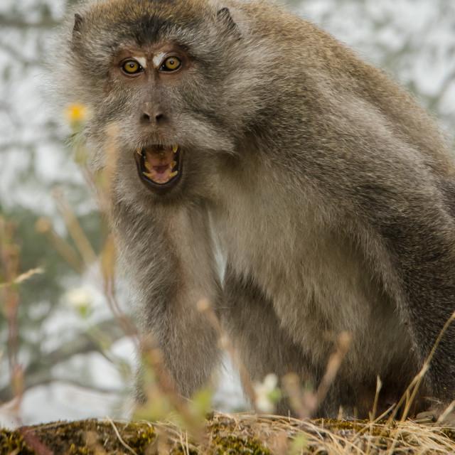 """""""Monkey Business 2"""" stock image"""