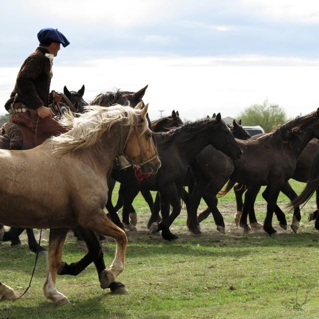 """herding"" stock image"