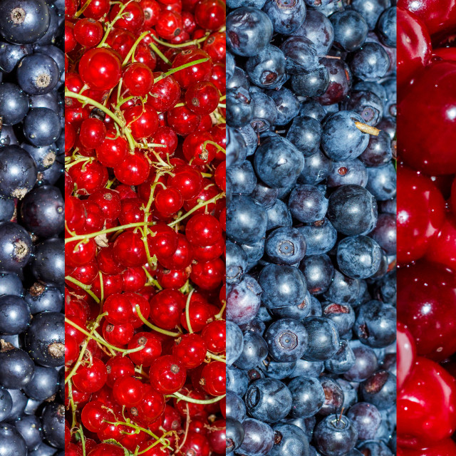 """""""4 types of berries collage: black currants, red currants, blueberries, cherries"""" stock image"""