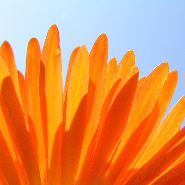 """Closeup Of Orange Flower"" stock image"