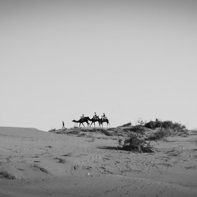 """camels2"" stock image"