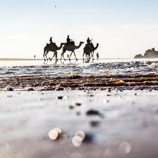 """""""camels3"""" stock image"""