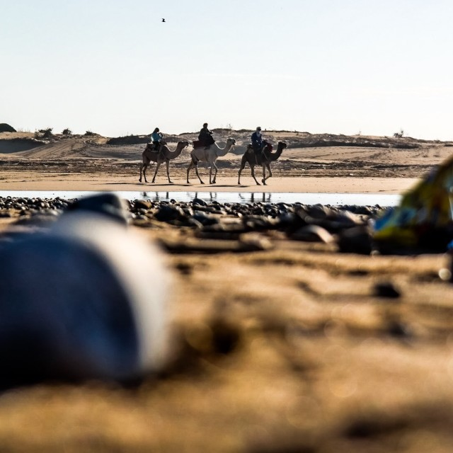 """""""camels2"""" stock image"""