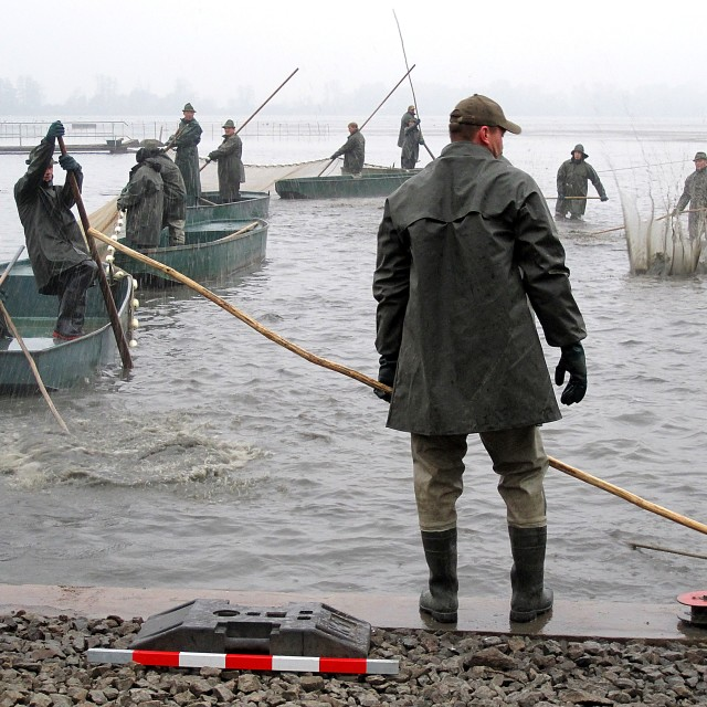 """""""Fishing Out 6"""" stock image"""