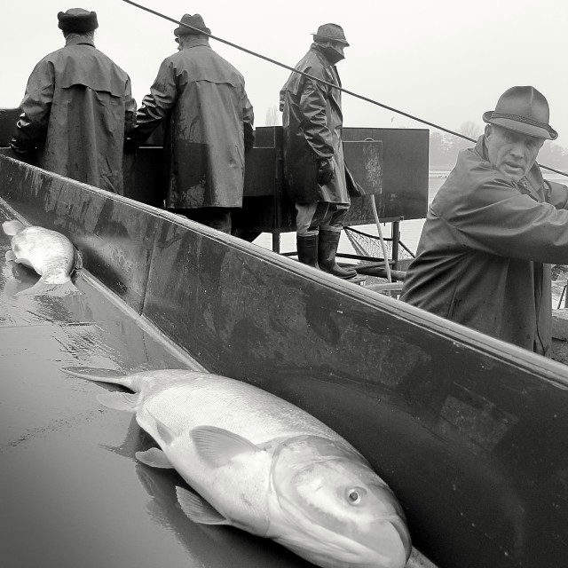 """""""Fishing Out 12"""" stock image"""