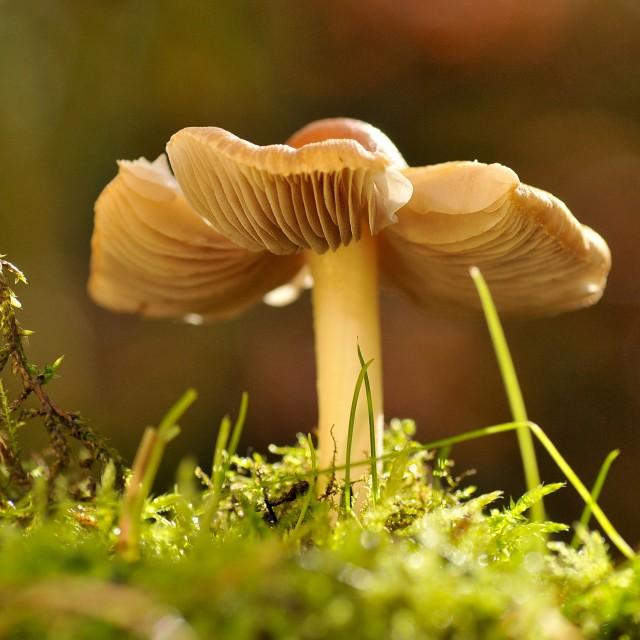 """""""Mushroom 2"""" stock image"""