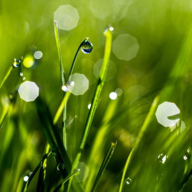"""Morning dew"" stock image"