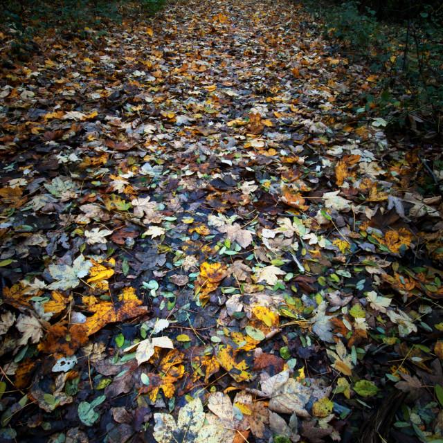 """Autumn trail 1"" stock image"