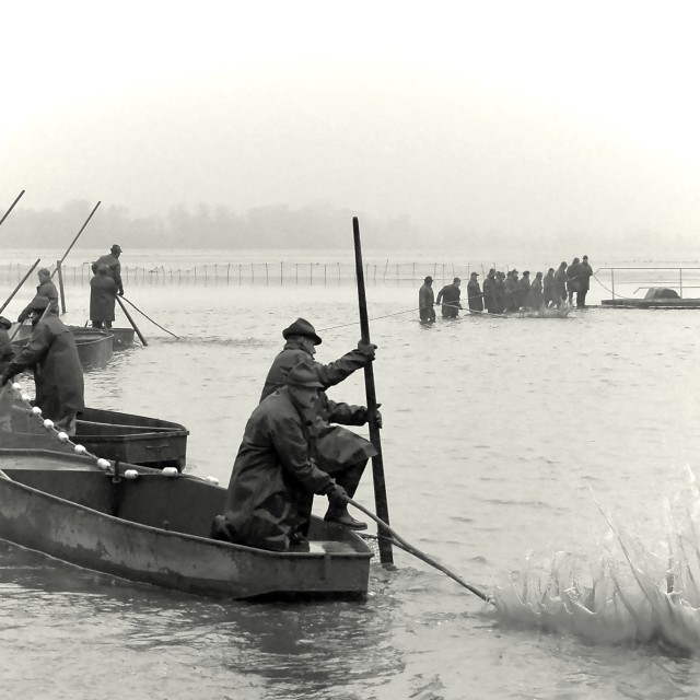 """""""Fishing Out 14"""" stock image"""