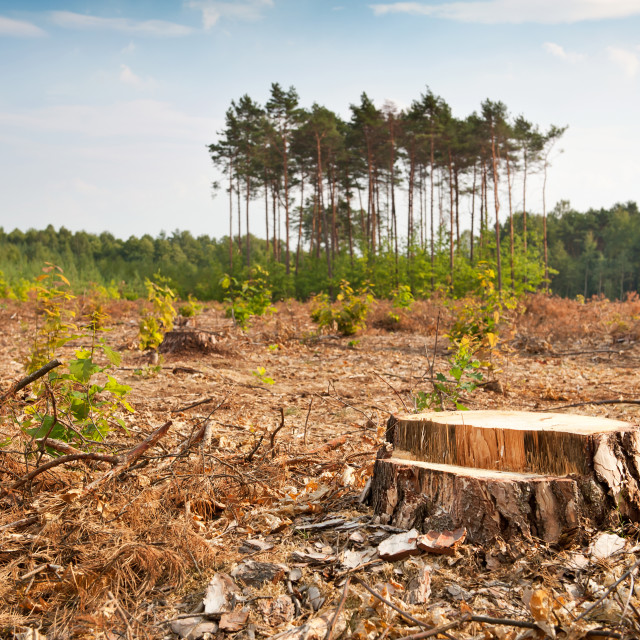 """Woods lone trunk in deforestation"" stock image"