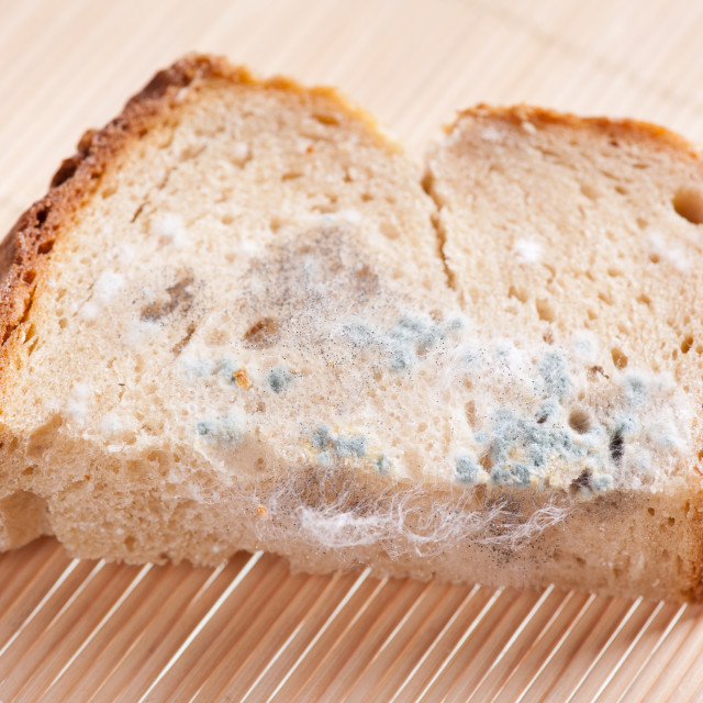 """Portion of moldy bread zoom"" stock image"