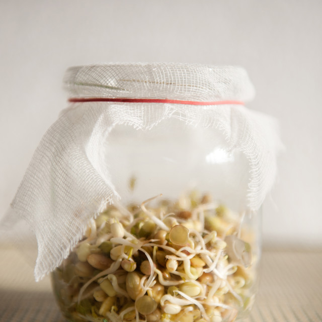 """growing sprouts mix in glass jar with bandage"" stock image"