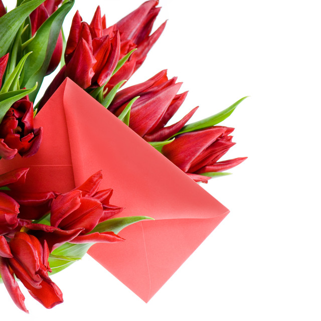 """""""red envelope and tulips"""" stock image"""
