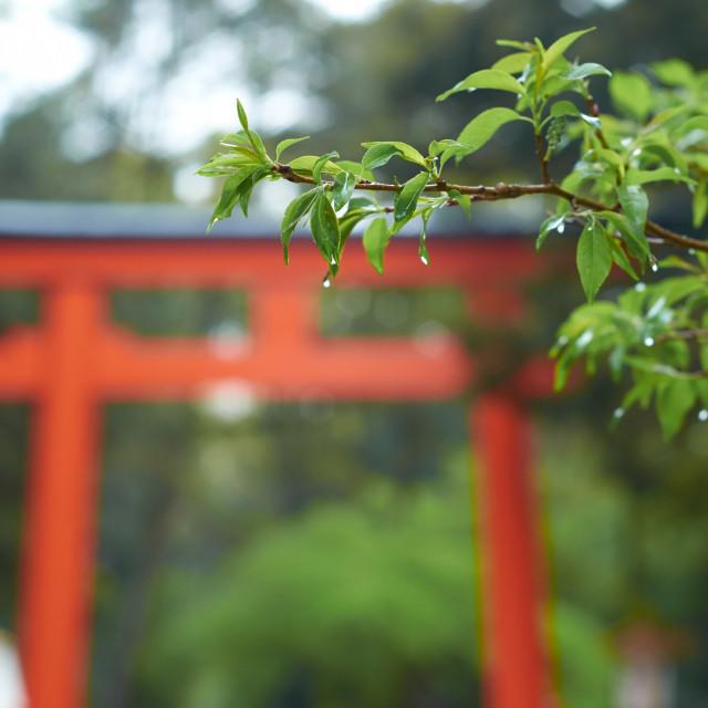 """Torii Gate background"" stock image"