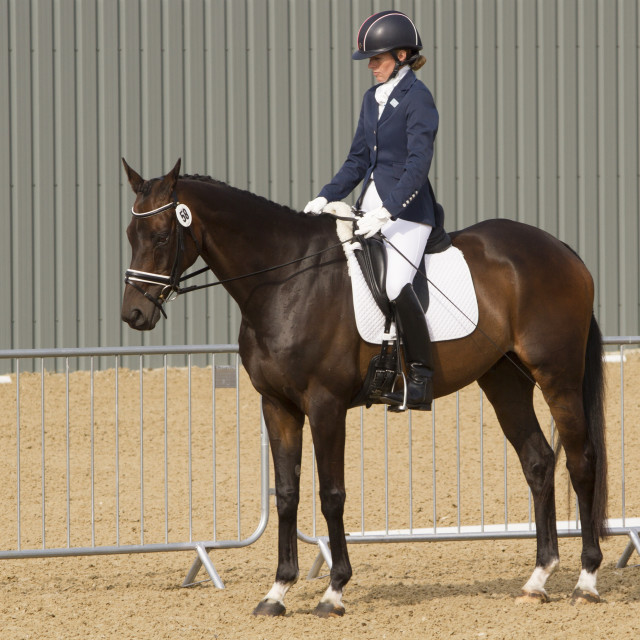 """Dressage event"" stock image"