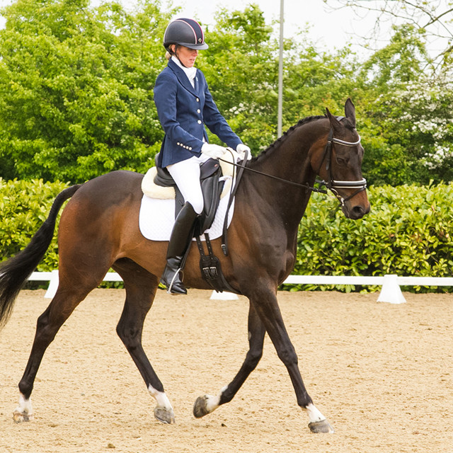 """Dressage, Equine Centre, Cambridgeshire, UK"" stock image"