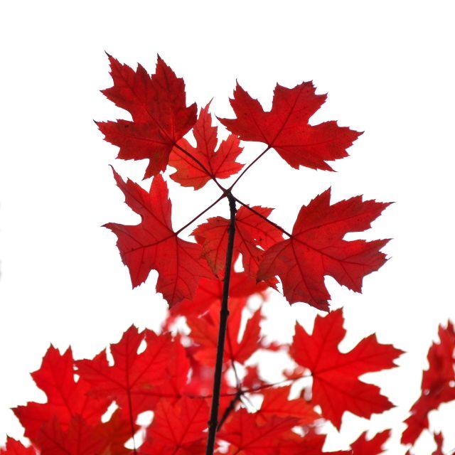 """""""O Canada"""" stock image"""