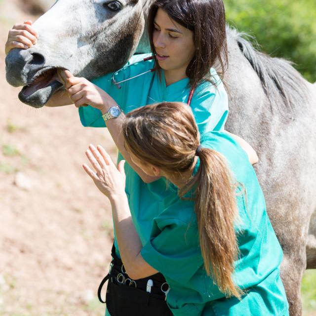 """Equine veterinary"" stock image"