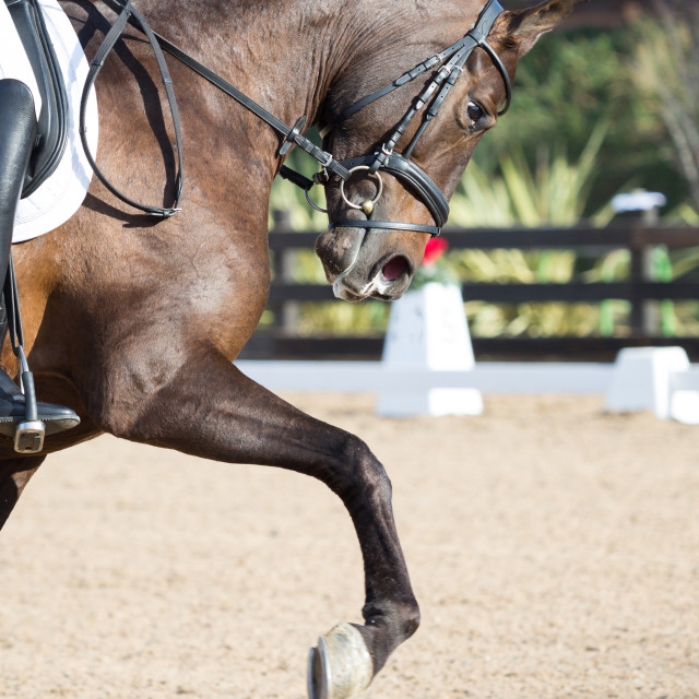 """Dressage Horses"" stock image"