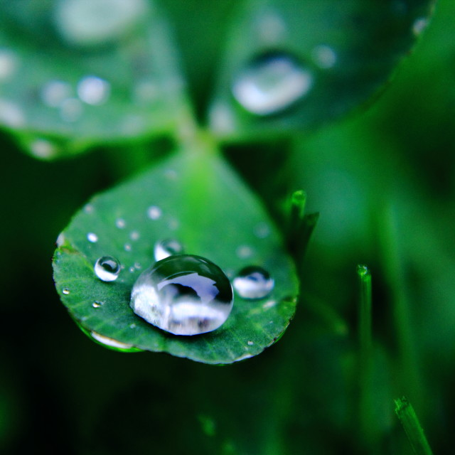 """water drop on leaf"" stock image"