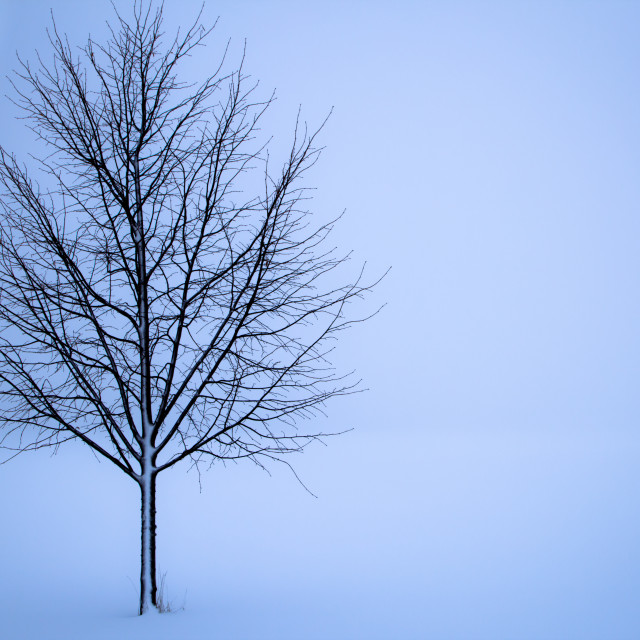 """""""Tree in the white"""" stock image"""