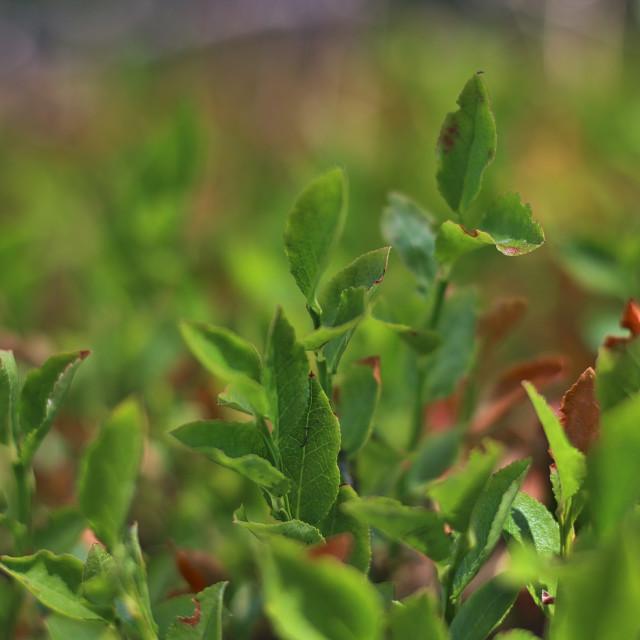 """Vibrant Wild Foliage"" stock image"