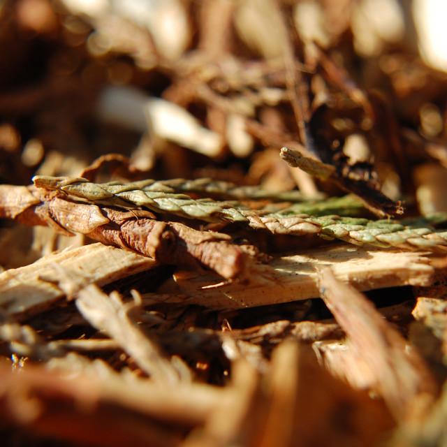 """Bark mulch 1"" stock image"