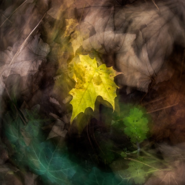 """autumn leaves 2"" stock image"