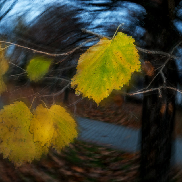 """Autumn leaves 3"" stock image"
