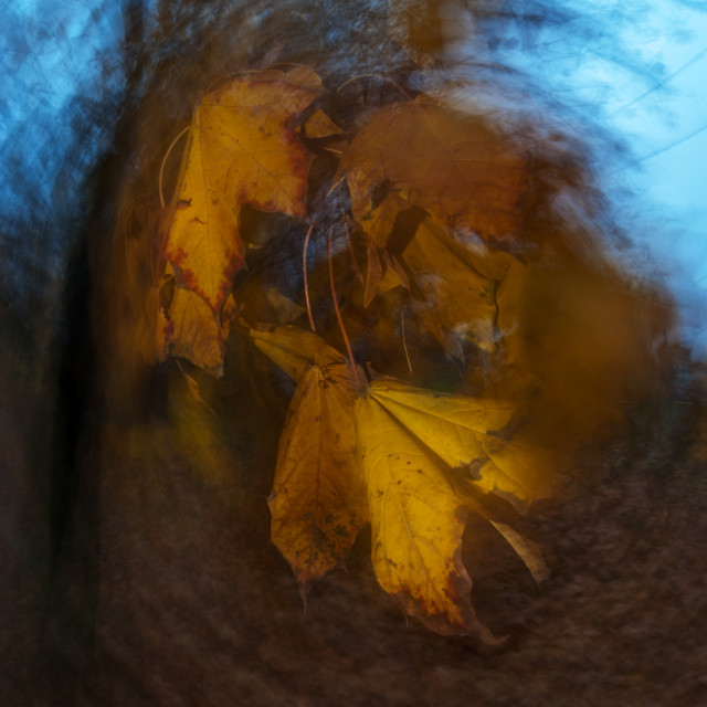 """Autumn leaves 6"" stock image"