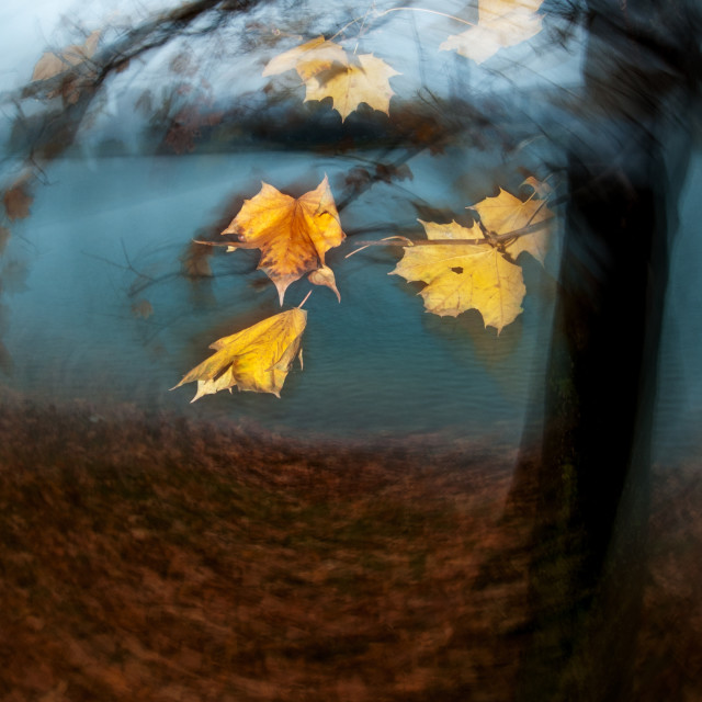 """Autumn leaves 7"" stock image"
