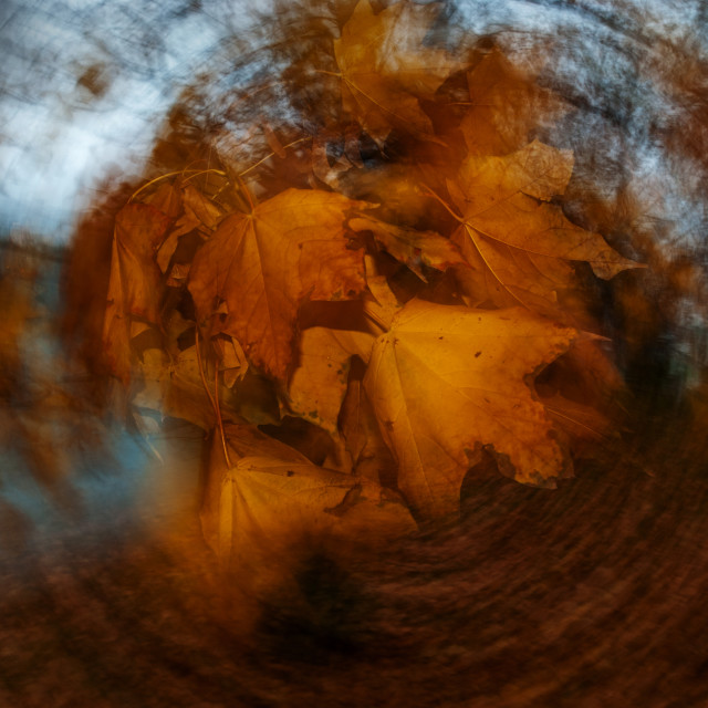"""Autumn leaves 5"" stock image"