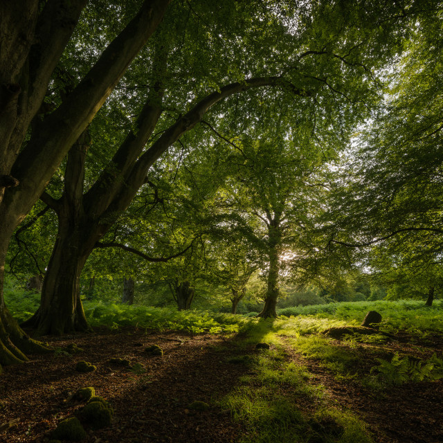 """The New Forest - Shadows"" stock image"