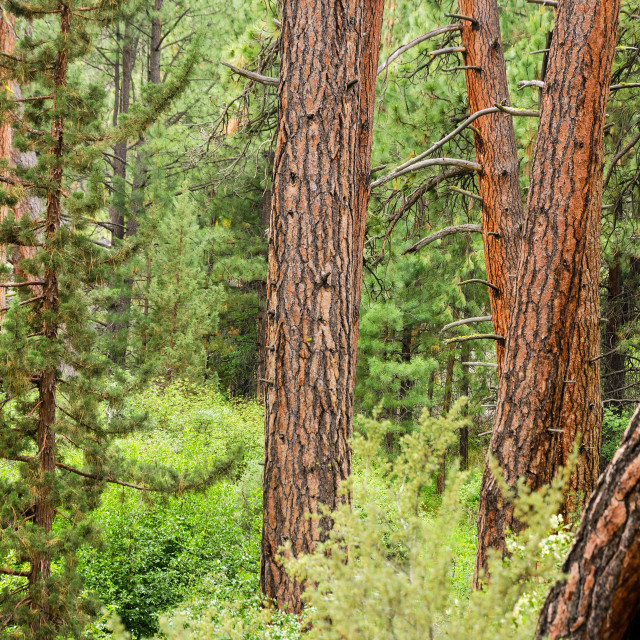 """""""Dense Forest View"""" stock image"""