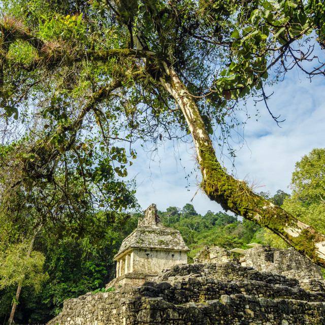 """Mayan Temple and Trees"" stock image"