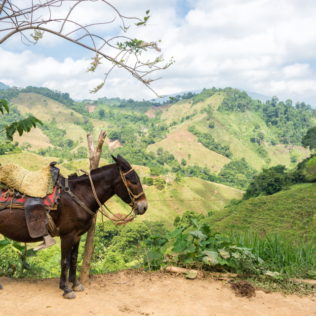 """Donkey and Hills"" stock image"