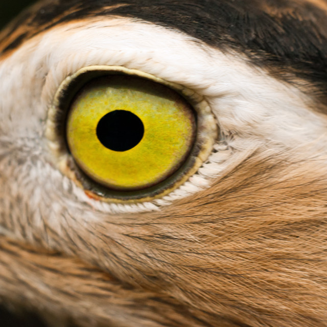 """Closeup Eye of a Bird"" stock image"