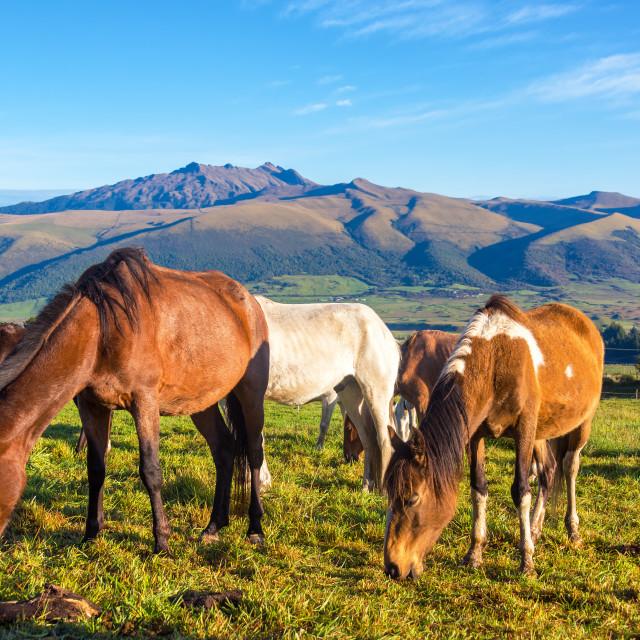 """""""Horses in Rural Ecuador"""" stock image"""
