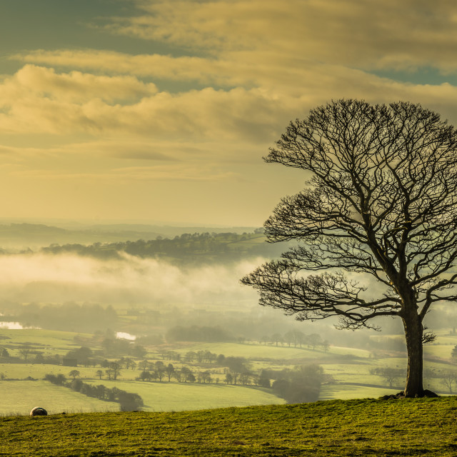 """Misty tree at Roaches"" stock image"